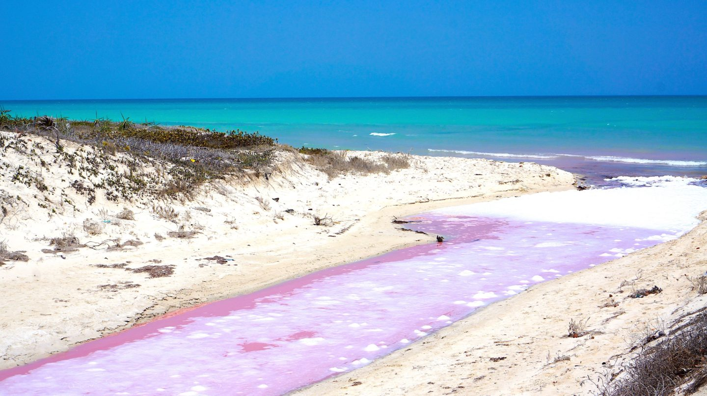 Pink lagoons   Las Coloradas   Merida Travel Guide   Things to do   Where to stay   What to eat   Restaurants   Transportation   Day Trips   Merida Mexico